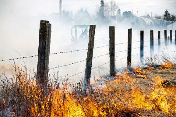 bushfire-web