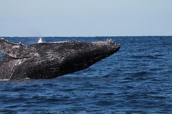 humpback-flip-web