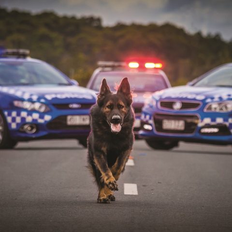 Dogs on Patrol Day at Nambour for everyone and their dog!