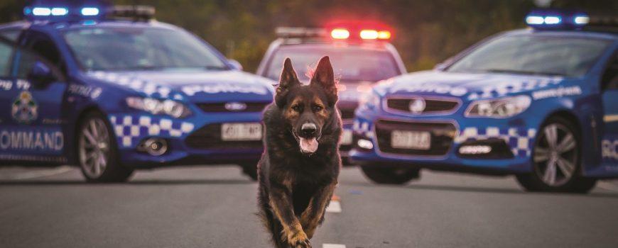 Police Dog DJ SC Dog Squad