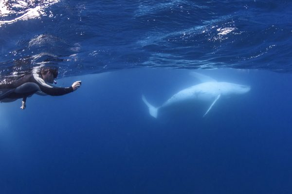 Swimmer-photgraphing-whale-belly_DSC6530-Credit-Migration-Media-Underwater-Imaging-WEB