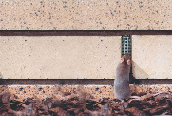 Mice can't access weep holes with a Weepa Protector