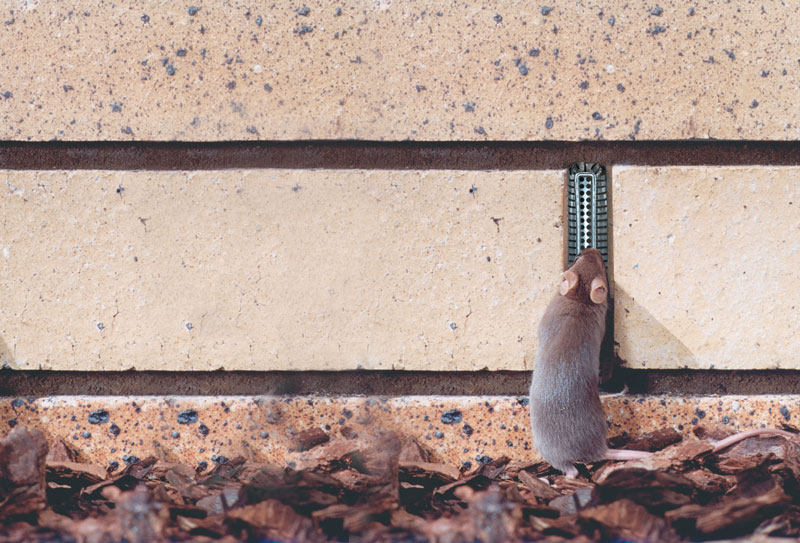 Weepa-Protector-mouse-260215-web