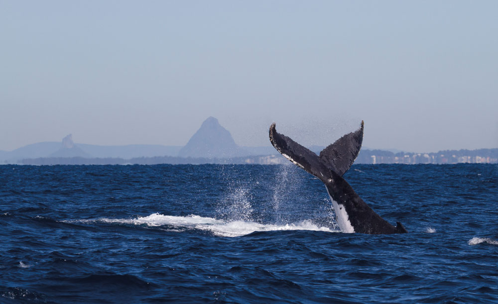 Whale-tail-Glasshouse-in-background-1---credit-Brett-Wortman