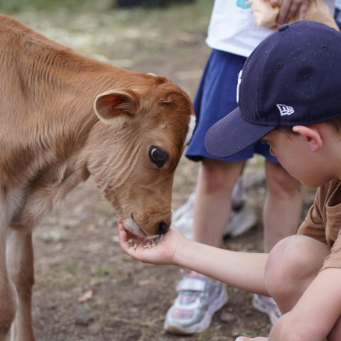 Special Christmas Farm Day to offer a great summer country day out